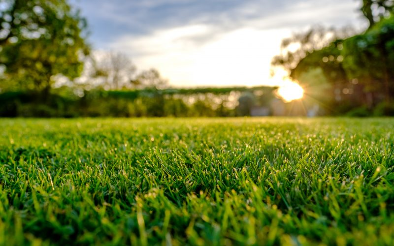 Root zones and drainage solutions for sports lawns